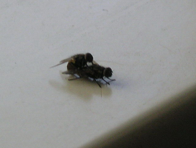 А мухи ебутся